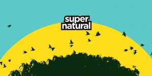 Kanda, Kodža i Nebojša, Del Arno bend i Irie FM na 'Supernatural festivalu'