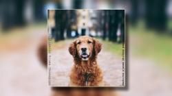 """PBO predstavio novi album """"Neobične pjesme običnog psa"""""""
